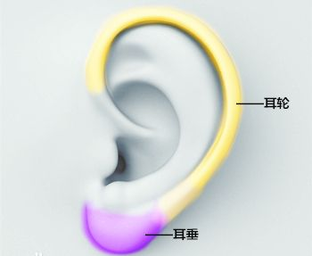 好的耳垂是怎么样的