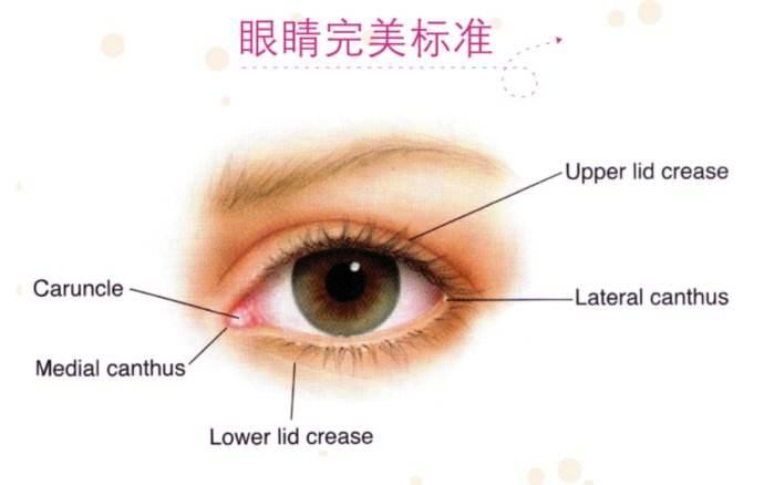 上海眼部整形开眼角一般多少钱