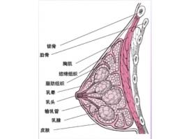 上海乳房整形哪家医院好