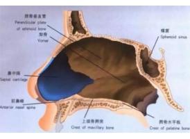 上海鼻中隔整形手术成效怎么样