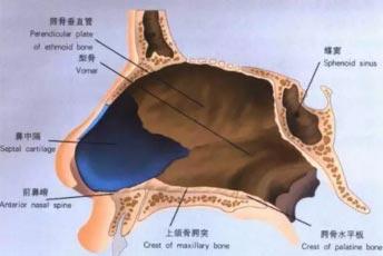 上海鼻中隔整形手术效果怎么样