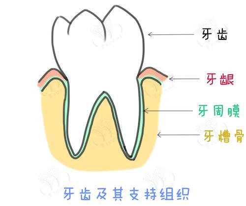 牙周病怎么预防