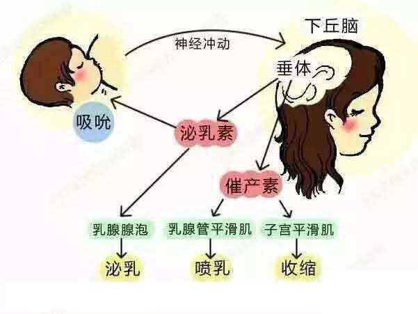 上海丰胸后还能哺乳吗,乳汁会受影响吗?