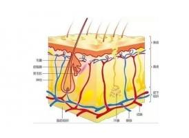 上海美莱祛痘丨你一定想象不到长痘真元凶是什么