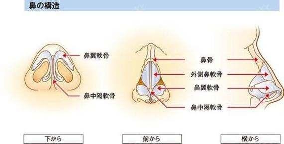 上海鼻头鼻翼缩小手术价格贵吗多少钱